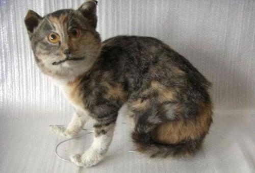 badly stuffed cat